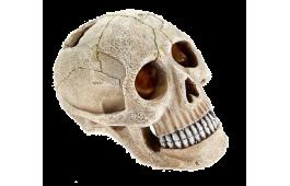 """Decoração Aquário """"Small Skull"""""""